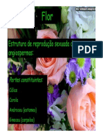 aula fruto flor 2 (1)