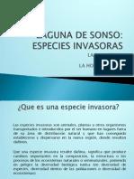 lagunadesonsoafectadaporsusespeciesinvasoras-140115143125-phpapp02