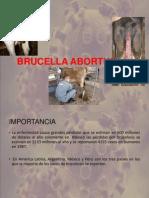 BRUCELLA ABORTUS