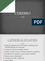 cerebro-140521153146-phpapp02