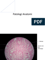 Praktikum-Patologi Anatomi