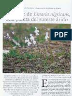 El declive de Linaria nigricans, una planta del suereste árido (ARTÍCULO)