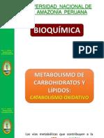 Cap. 4 Catabolismo Oxidativo