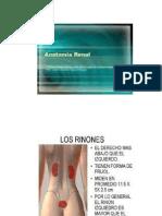 Anato Fisiologia Renal