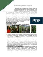 Guía Para Voluntarixs_español