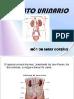 Sistema Urinario (s)