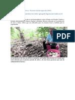 Los Tubérculos Panameños Con Valor Agregado Logran Mercados en El Extranjero