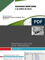 Steneotarsonemus Spinky en Arroz Floramite