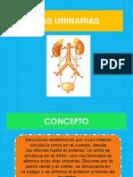 Vias Urinarias (1)