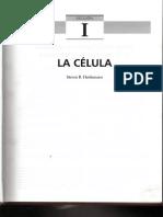 01. Bases Moleculares y Celulares de La Regulación Fisiológica