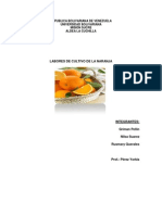 cultivo de la naranja.docx