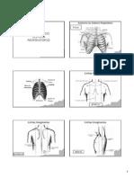 Anatomia Respiratoria I