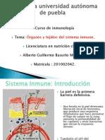Organos y Tejidos Inmune