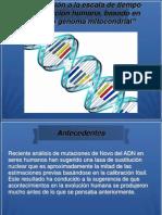 Genoma Mitocondrial
