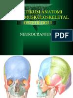 Neuro Cranium 1