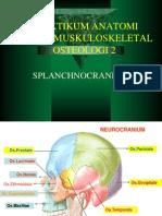 splanchnocranium2