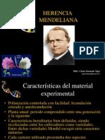 230486256 Herencia Mendeliana Ppt