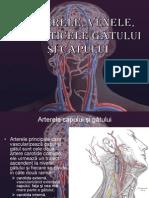 Arterele, Venele, Limfaticele Gâtului