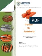 Cultivo de Zanahoria 2014