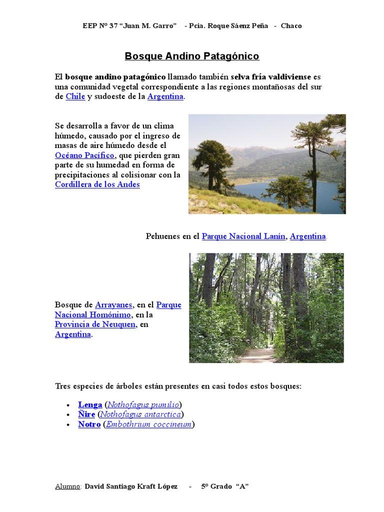 Bosque Andino Patagonico Geografia Fisica Earth Sciences