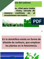 Ciclo Carbono