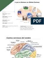Trabajo Del Cerebro