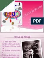 bioqm ciclo de krebs