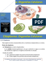 Aula Organelas Citoplasmaticas