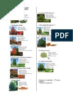2012 Tree Types