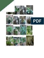 50 Especies de Plantas