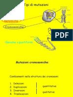 mutazioneridottaGC
