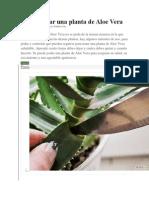 Cómo Podar Una Planta de Aloe Vera