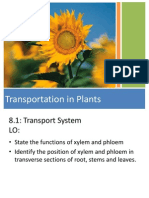 Y10 Plant Transport Lesson 1