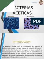 Bacterias Aceticas