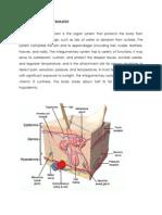 Anatomy and Physiologoy