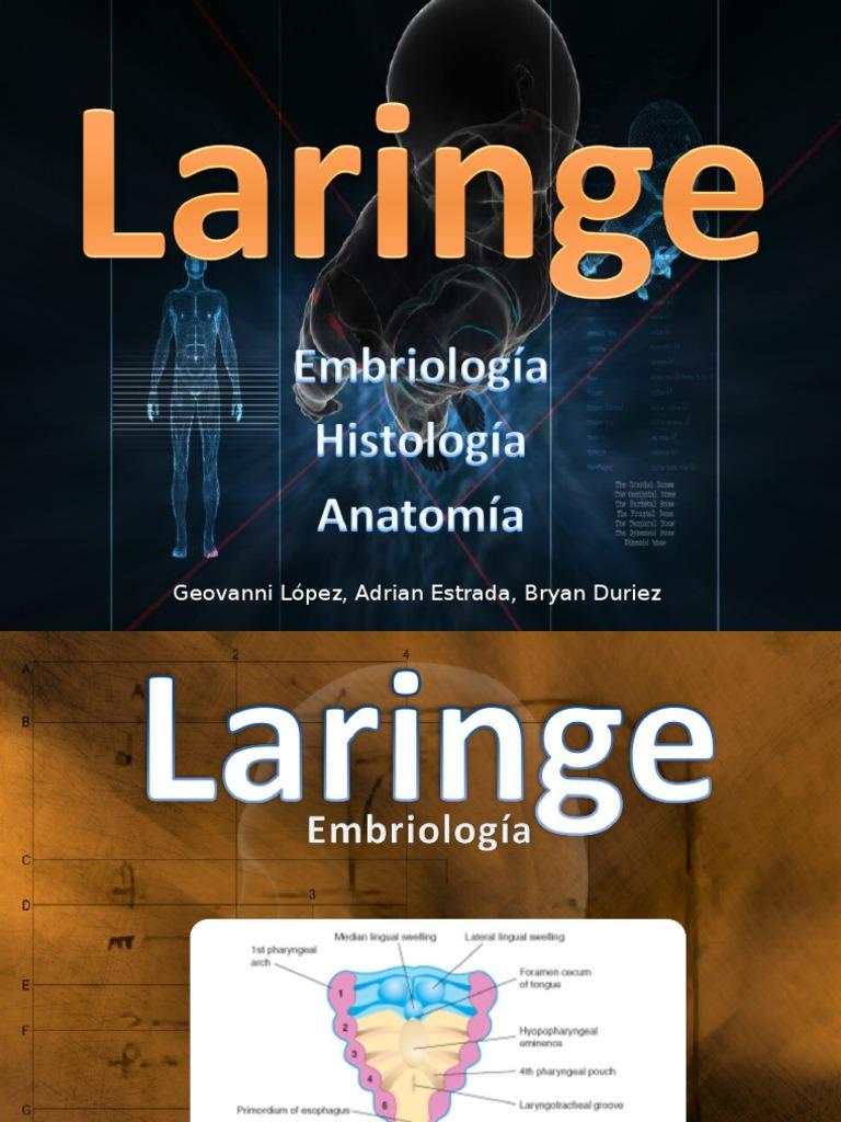 Laringe