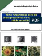 Organizacao Cel Proc e Eucar2013
