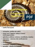 SUBFILO MYRIAPODA