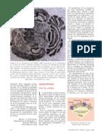 II.4.b. Lipoproteínas Vías de Síntesis