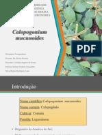 apresentação forragicultura (2)
