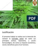 Cannabis sativa.pptx