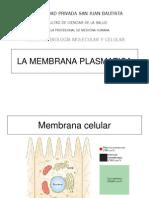 CapituloMemb Plasma