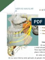 Nervio Alveolar