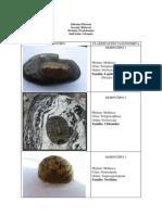 Clasificacion Taxonomica Ind Rocoso Salida Cabo de La Vela (1)