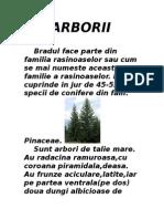 ARBORII