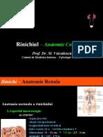 Rinichiul – Anatomie Corelativa