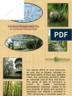 Adventure Of Jungle Safari Trip At Gorumara National Park