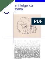 Animal Inteligencia