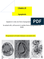 Chapter 18 - Apoptosis - 112612