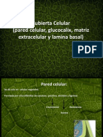 Cubierta Celular Pared Celular, Glucocalix, Matriz Extracelular y Lamina Basal)l